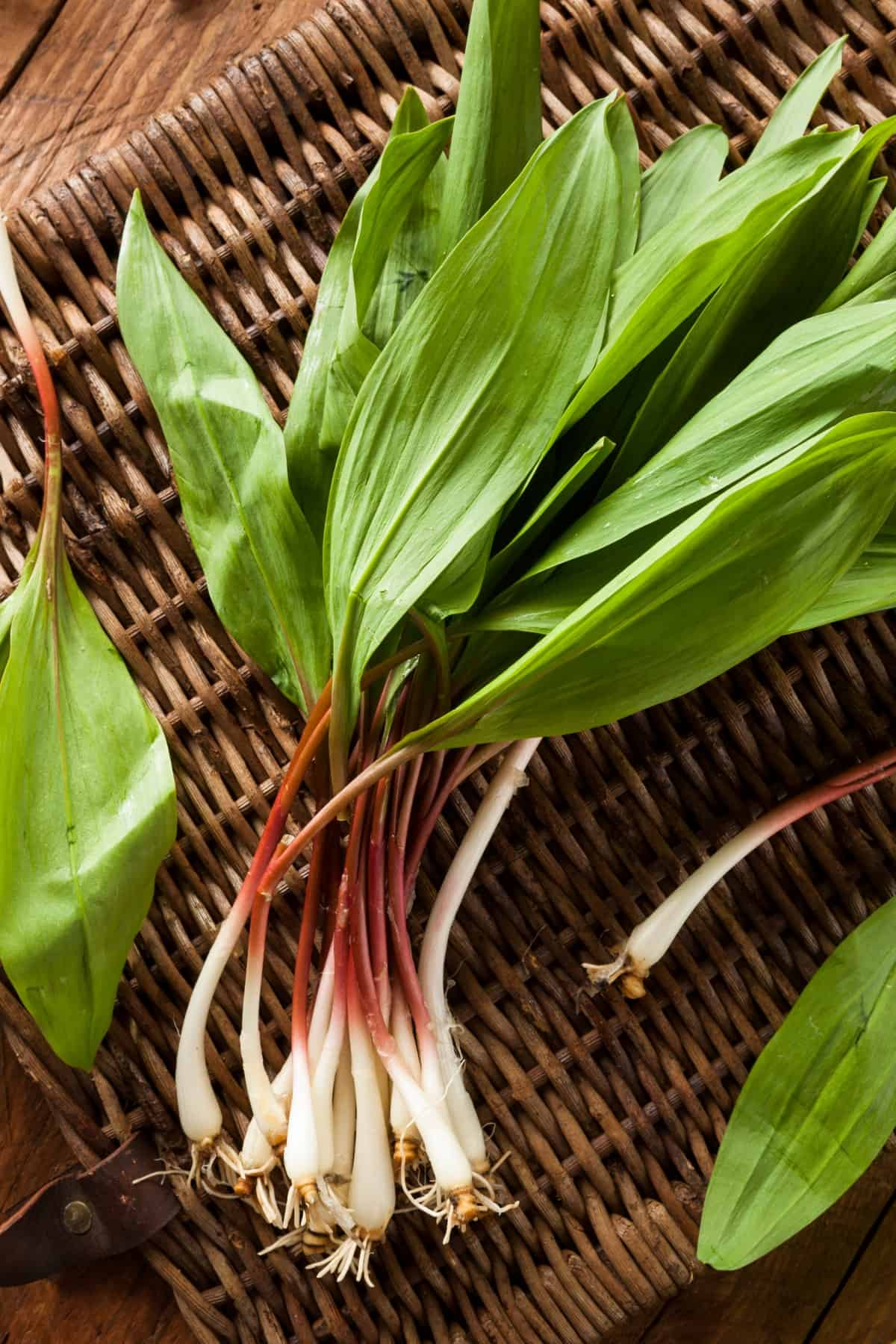 Raw Organic Green Spring Veggies Ramps Ready to Cook With on a wicker basket
