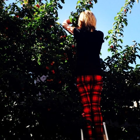 Crabapple picking by Noshing With The Nolands