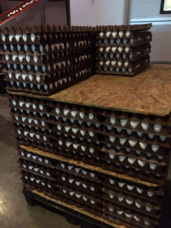 Egg Farmers of Alberta by Noshing With The Nolands (12) (Custom)