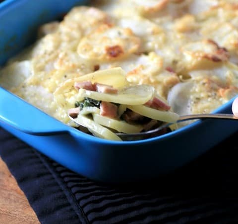 Canadian Bacon, Swiss Chard, Potato Gratin by Noshing With The Nolands  480x480