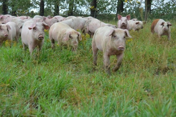 Spragg's Meat Shop Farm to Table Tour