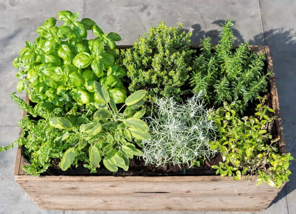 How to Grow Your Own Herbs