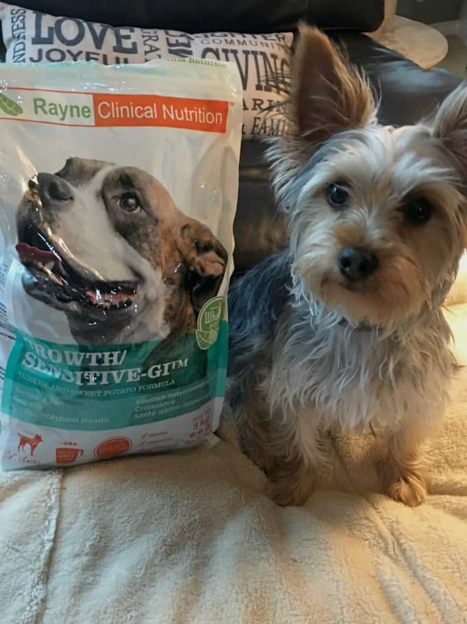 Rayne Clinical Nutrition for Your Dog and Cat
