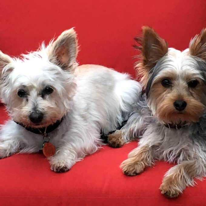 Lola and Ziggy on a red chair