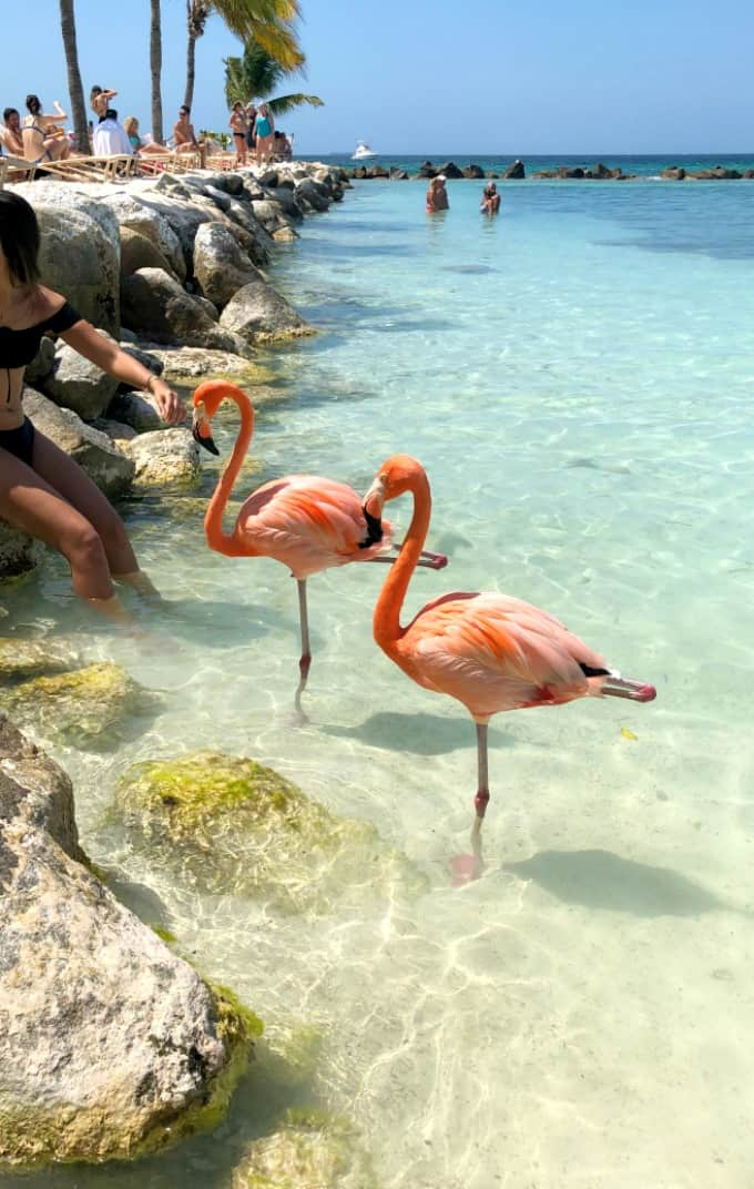 Two flamingos standing on one leg in the water