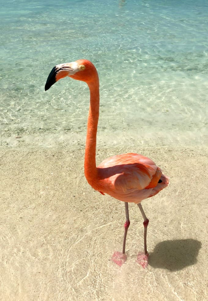 Flamingo on the beach