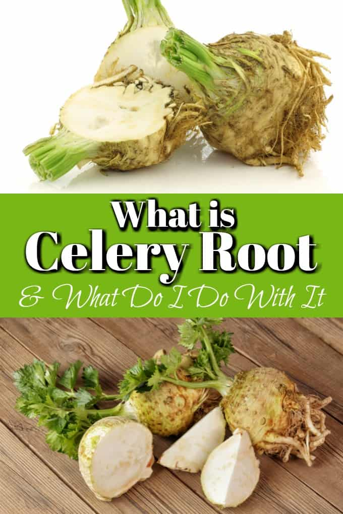 What is Celery Root and What Do I Do With It? How to cook, peel and eat is explained in this easy read so you can try something perhaps new!! #celeryroot