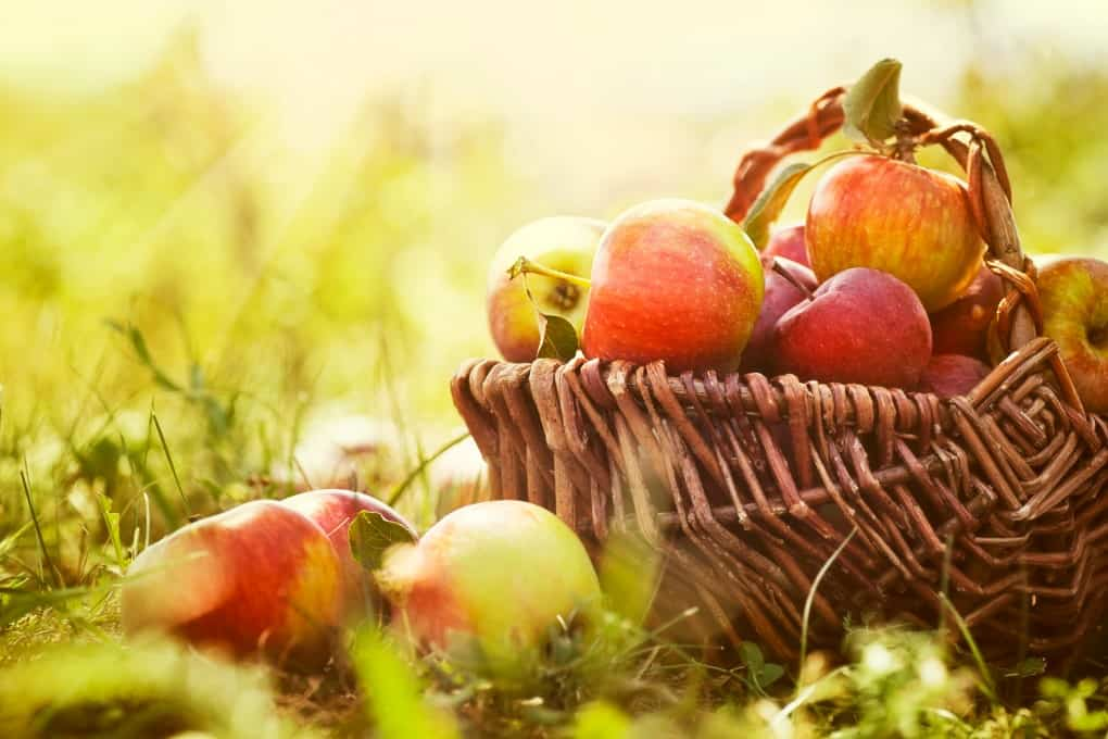 Basket of apples on the grass for Fall Garden Tips to Get You Ready for Winter