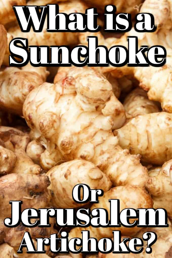 What is a Sunchoke or Jerusalem Artichoke? Learn all about this forgotten vegetable and how to cook it. #sunchoke #jerusalemartichoke