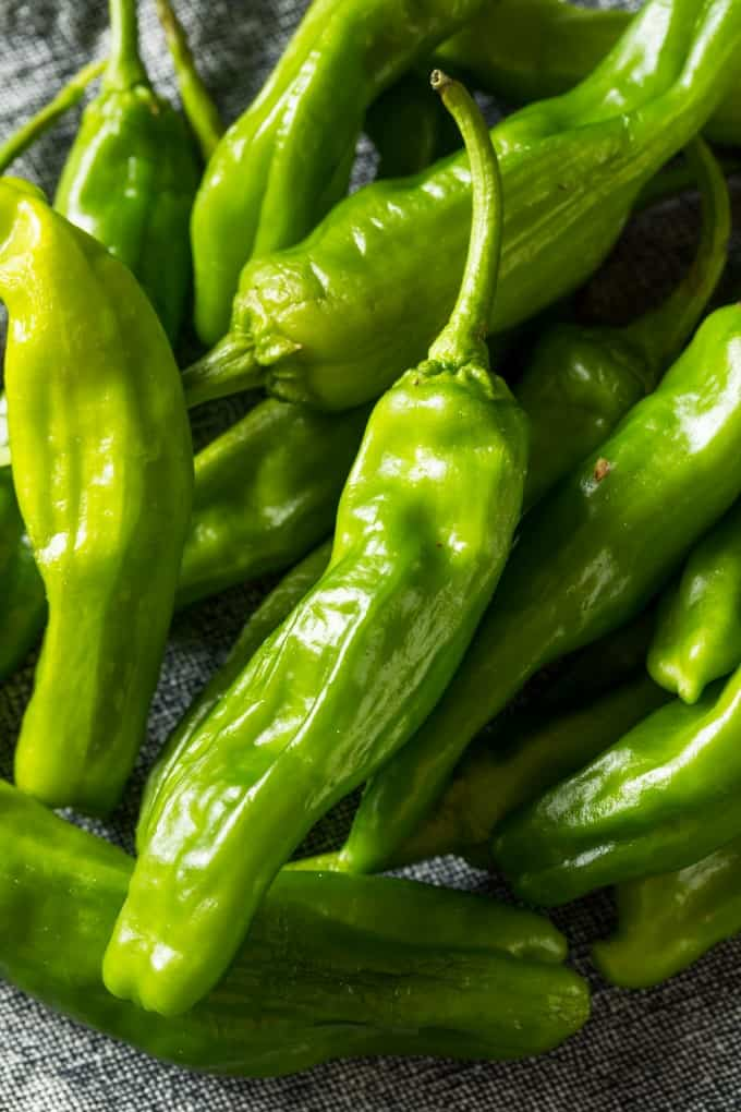 Raw Green Organic Shishito Peppers in a Bunch