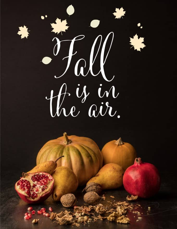 Fall is in the Air Banner with season fruit and vegetables.