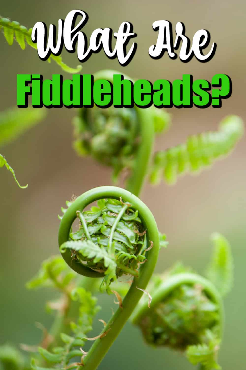 What are Fiddleheads and When Are They In Season? Pin