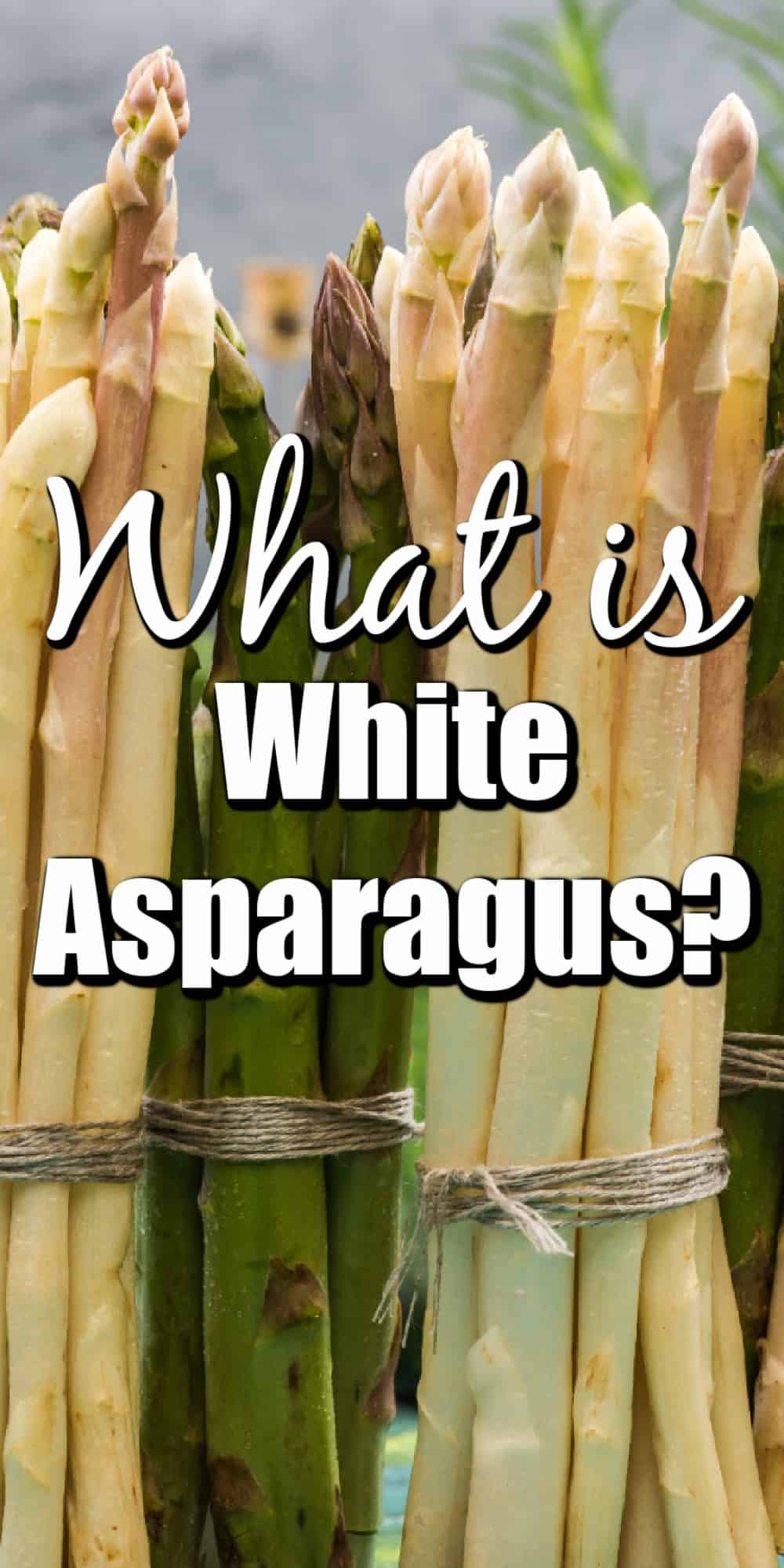 What is White Asparagus? Pin