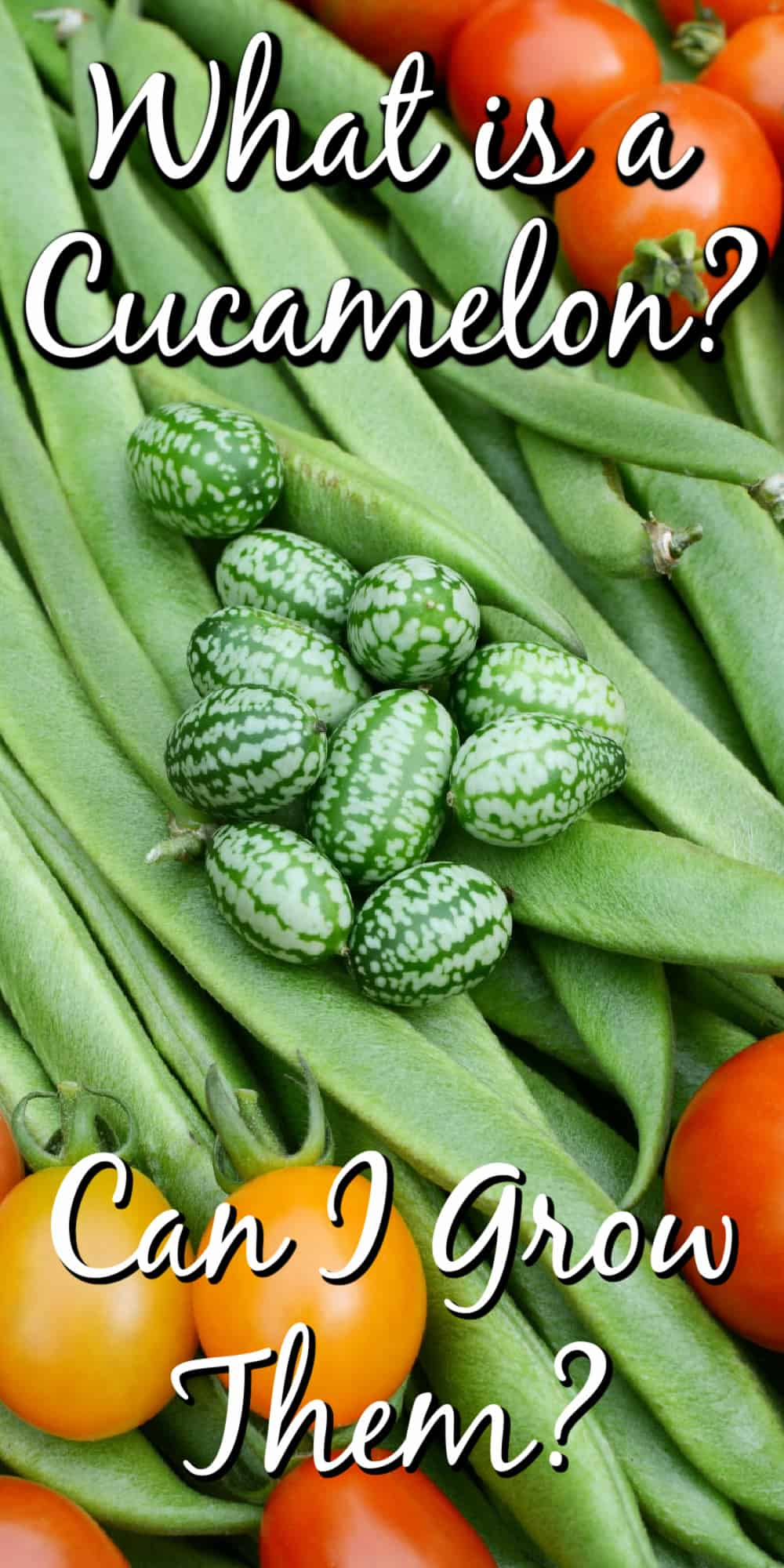 What is a Cucamelon? Can I Grow Them? Pin